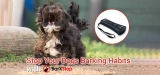 BarXStop Review: Does it stop your dog's barking habits?